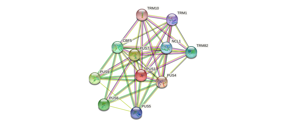 PUS1 protein (Saccharomyces cerevisiae) - STRING interaction network