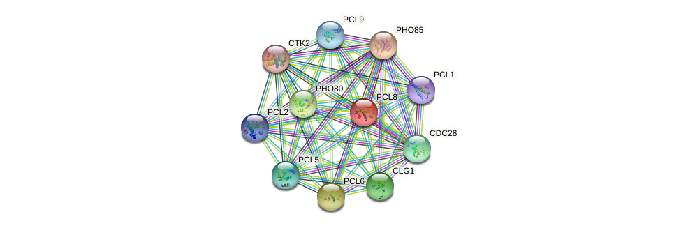 PCL8 protein (Saccharomyces cerevisiae) - STRING interaction network