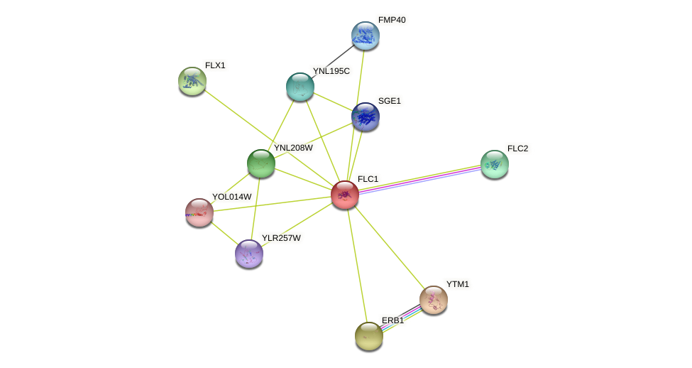 FLC1 protein (Saccharomyces cerevisiae) - STRING interaction network