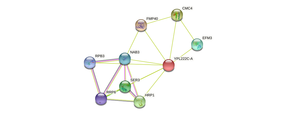 YPL222C-A protein (Saccharomyces cerevisiae) - STRING interaction network