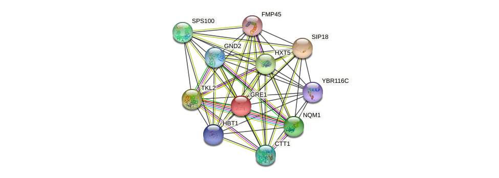 GRE1 protein (Saccharomyces cerevisiae) - STRING interaction network
