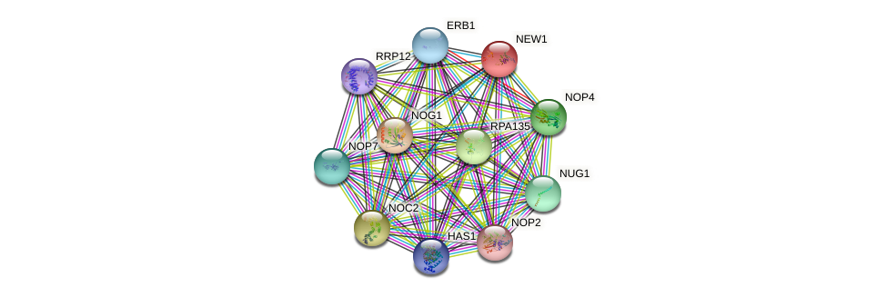 NEW1 protein (Saccharomyces cerevisiae) - STRING interaction network