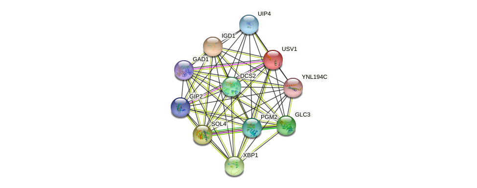 USV1 protein (Saccharomyces cerevisiae) - STRING interaction network