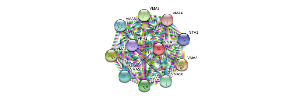 VMA11 protein (Saccharomyces cerevisiae) - STRING interaction network
