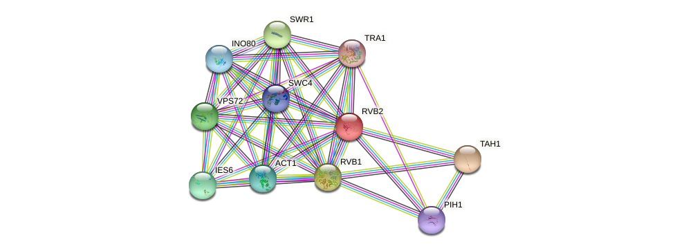 RVB2 protein (Saccharomyces cerevisiae) - STRING interaction network
