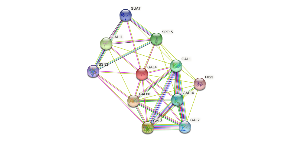 GAL4 protein (Saccharomyces cerevisiae) - STRING interaction network