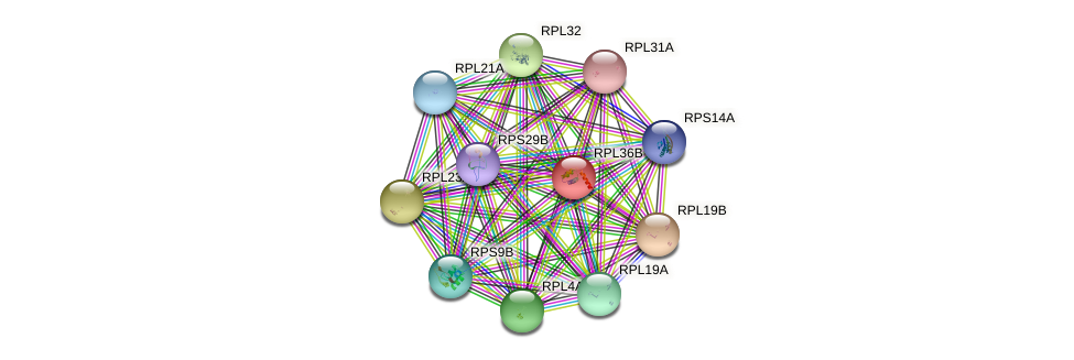 RPL36B protein (Saccharomyces cerevisiae) - STRING interaction network