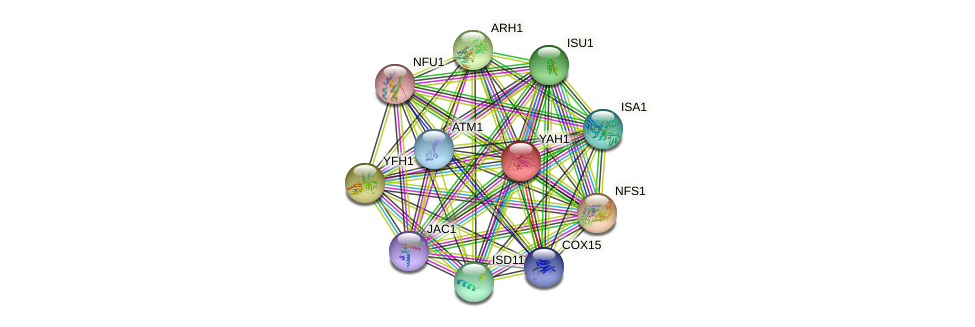 YAH1 protein (Saccharomyces cerevisiae) - STRING interaction network