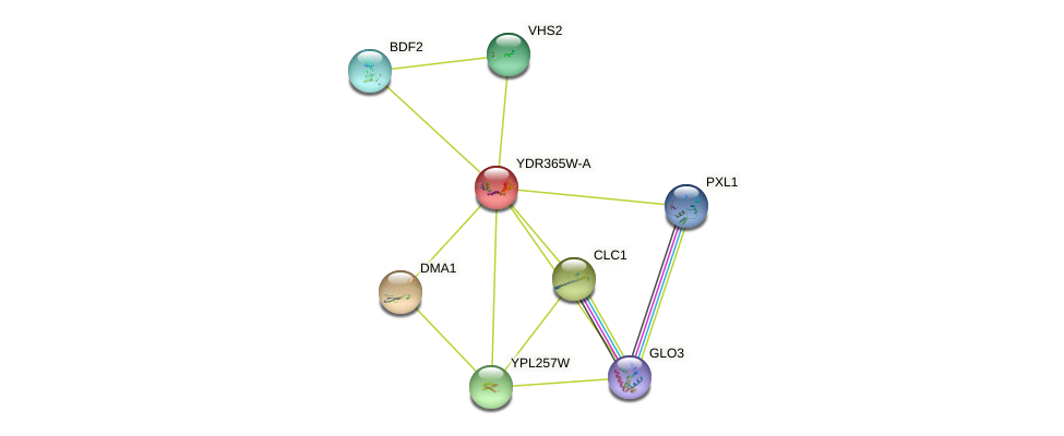 YDR365W-A protein (Saccharomyces cerevisiae) - STRING interaction network
