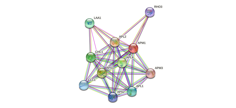 APM1 protein (Saccharomyces cerevisiae) - STRING interaction network