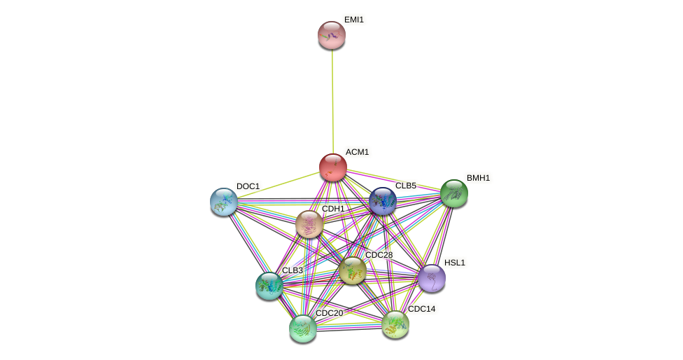 ACM1 protein (Saccharomyces cerevisiae) - STRING interaction network