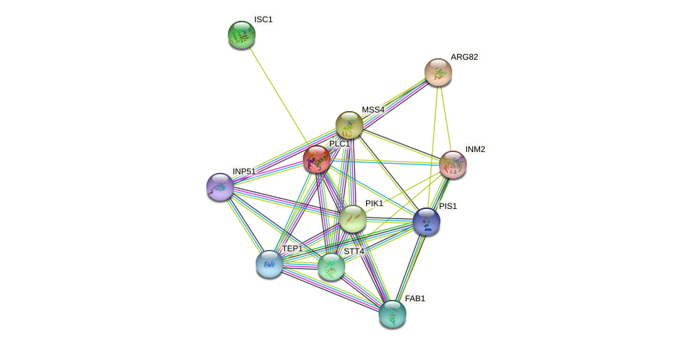 PLC1 protein (Saccharomyces cerevisiae) - STRING interaction network