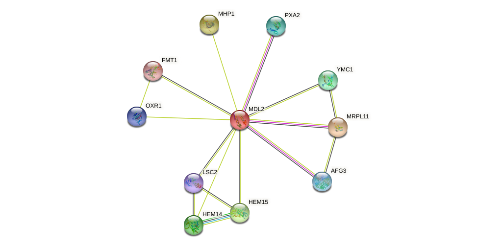 MDL2 protein (Saccharomyces cerevisiae) - STRING interaction network