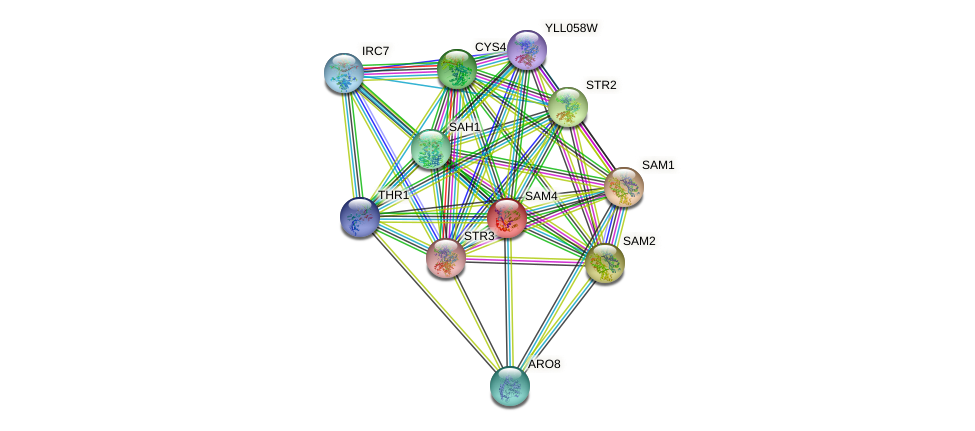 SAM4 protein (Saccharomyces cerevisiae) - STRING interaction network