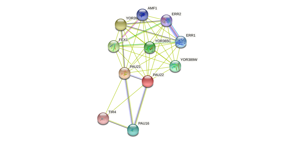 PAU22 protein (Saccharomyces cerevisiae) - STRING interaction network