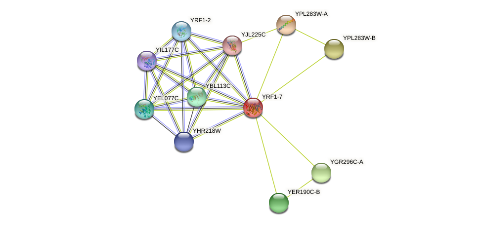 YRF1-7 protein (Saccharomyces cerevisiae) - STRING interaction network