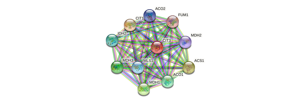 CIT3 protein (Saccharomyces cerevisiae) - STRING interaction network
