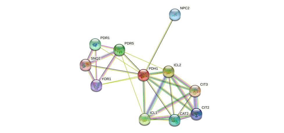 PDH1 protein (Saccharomyces cerevisiae) - STRING interaction network