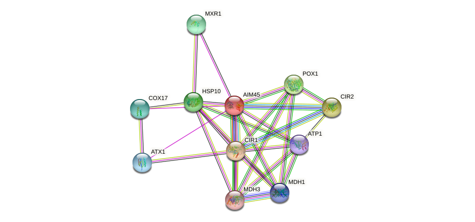 AIM45 protein (Saccharomyces cerevisiae) - STRING interaction network