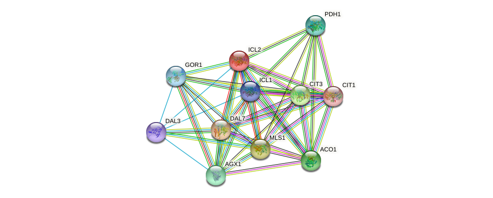 ICL2 protein (Saccharomyces cerevisiae) - STRING interaction network