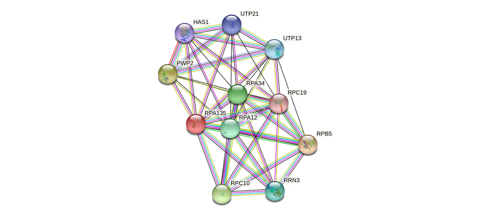 RPA135 protein (Saccharomyces cerevisiae) - STRING interaction network