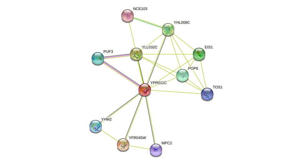 YPR011C protein (Saccharomyces cerevisiae) - STRING interaction network