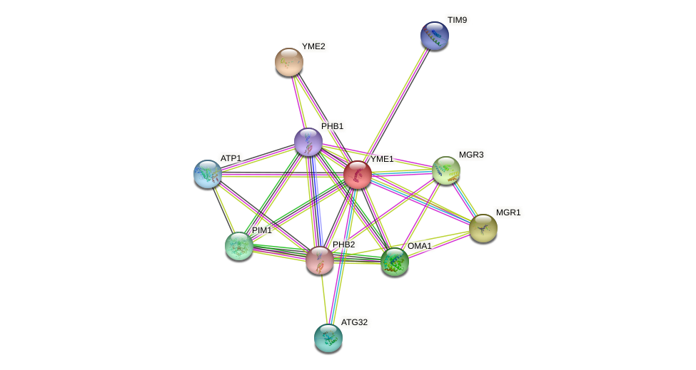 YME1 protein (Saccharomyces cerevisiae) - STRING interaction network