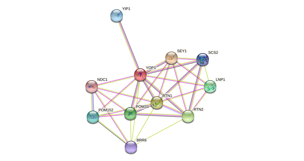 YOP1 protein (Saccharomyces cerevisiae) - STRING interaction network
