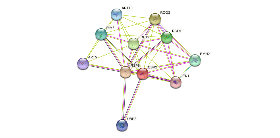 CSR2 protein (Saccharomyces cerevisiae) - STRING interaction network