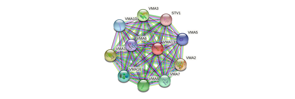 VMA13 protein (Saccharomyces cerevisiae) - STRING interaction network