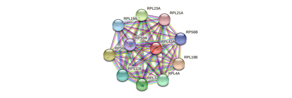 RPL43A protein (Saccharomyces cerevisiae) - STRING interaction network