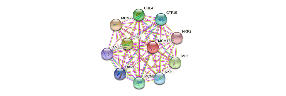 MCM16 protein (Saccharomyces cerevisiae) - STRING interaction network