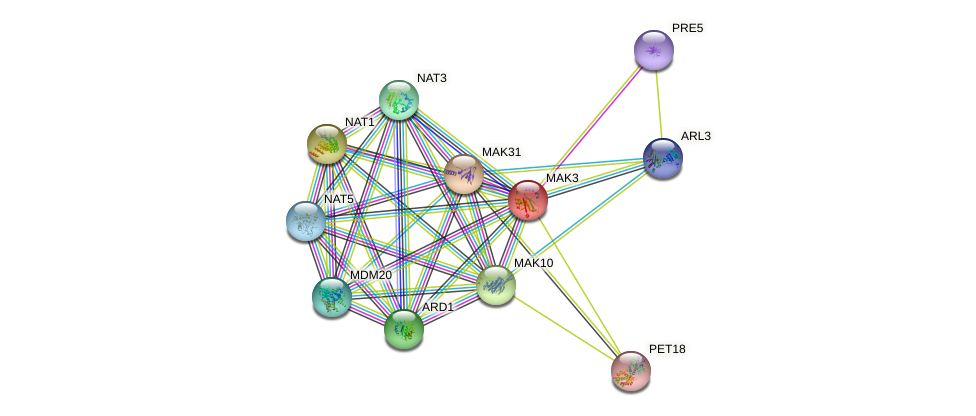 MAK3 protein (Saccharomyces cerevisiae) - STRING interaction network