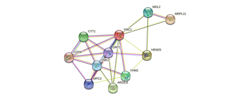 YMC1 protein (Saccharomyces cerevisiae) - STRING interaction network