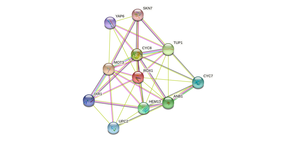 ROX1 protein (Saccharomyces cerevisiae) - STRING interaction network