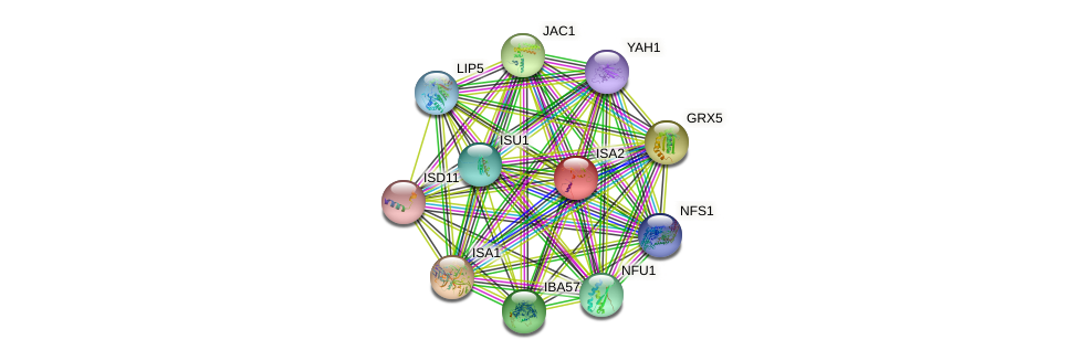 ISA2 protein (Saccharomyces cerevisiae) - STRING interaction network