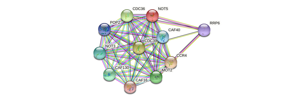 NOT5 protein (Saccharomyces cerevisiae) - STRING interaction network