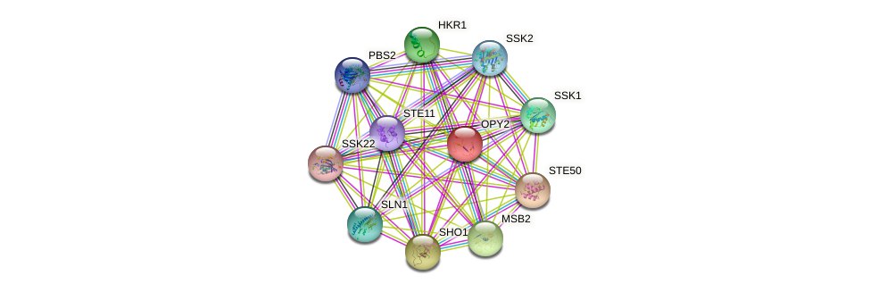 OPY2 protein (Saccharomyces cerevisiae) - STRING interaction network