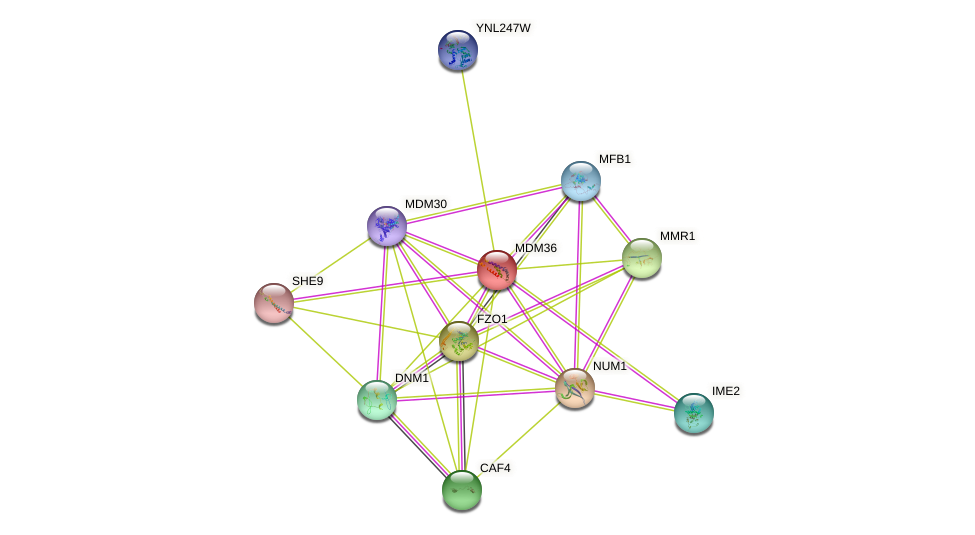 MDM36 protein (Saccharomyces cerevisiae) - STRING interaction network