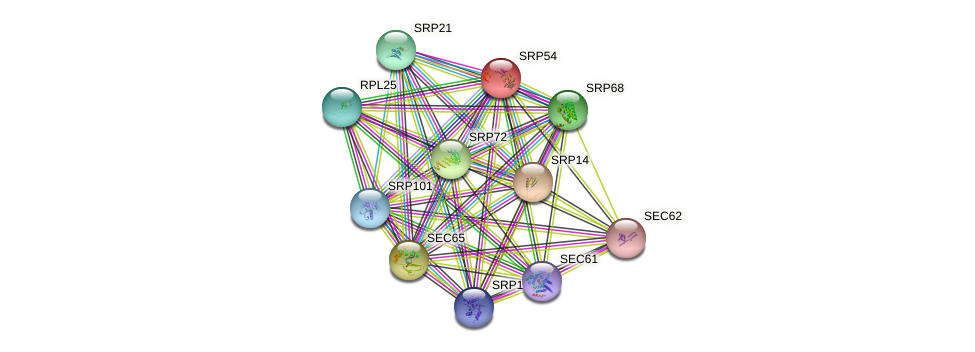 SRP54 protein (Saccharomyces cerevisiae) - STRING interaction network
