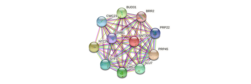 SNT309 protein (Saccharomyces cerevisiae) - STRING interaction network