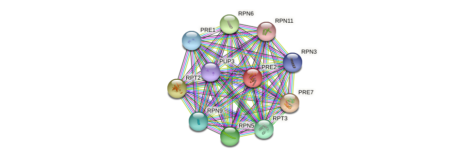 PRE2 protein (Saccharomyces cerevisiae) - STRING interaction network