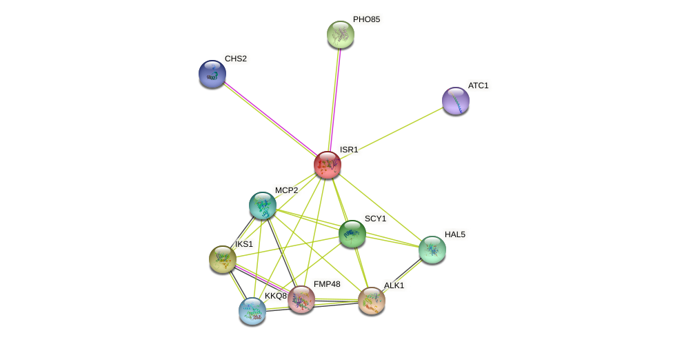 ISR1 protein (Saccharomyces cerevisiae) - STRING interaction network