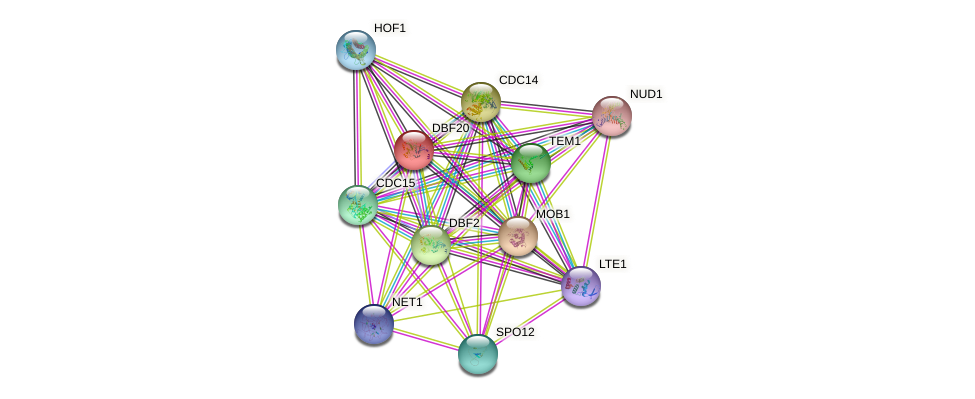 DBF20 protein (Saccharomyces cerevisiae) - STRING interaction network
