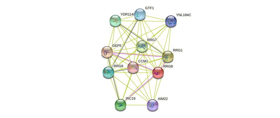 RRG8 protein (Saccharomyces cerevisiae) - STRING interaction network