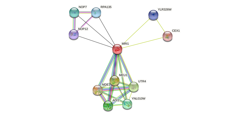 MRI1 protein (Saccharomyces cerevisiae) - STRING interaction network