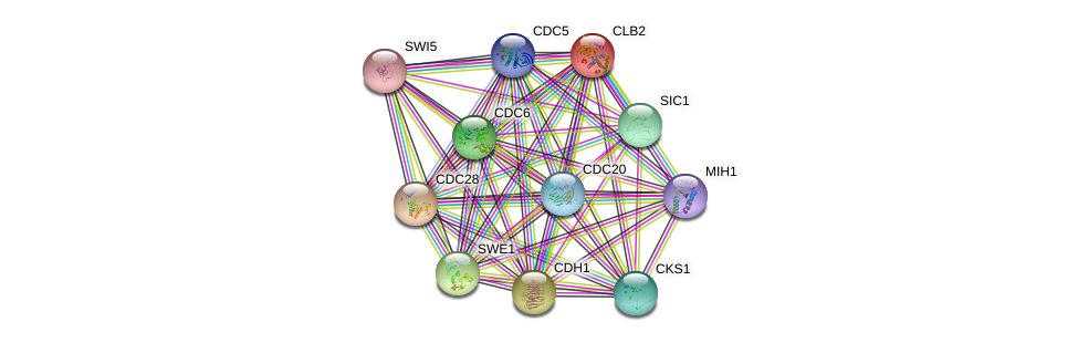CLB2 protein (Saccharomyces cerevisiae) - STRING interaction network