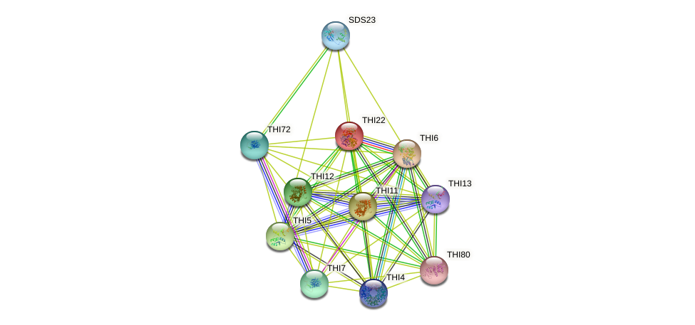 THI22 protein (Saccharomyces cerevisiae) - STRING interaction network
