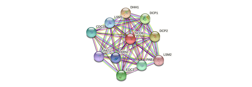 SCD6 protein (Saccharomyces cerevisiae) - STRING interaction network