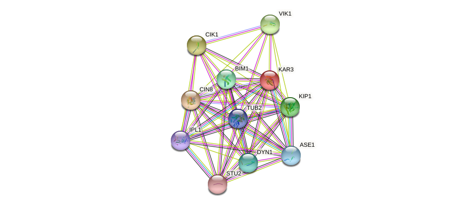 KAR3 protein (Saccharomyces cerevisiae) - STRING interaction network